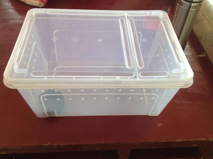 爬宠饲养盒蜘蛛蜥蜴蝎子青蛙蜗牛亚克力无味饲养盒 H6+水盆 晒单图