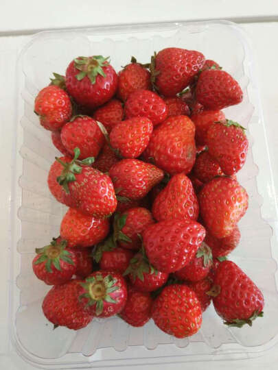 【游仙馆】富乐花乡现摘草莓 绿色新鲜水果  晒单图