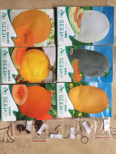 龙盘哈密瓜伽师瓜金丝搅瓜白糖罐红皮甜瓜白沙蜜香瓜木瓜果树瓜果种子 木瓜 晒单图