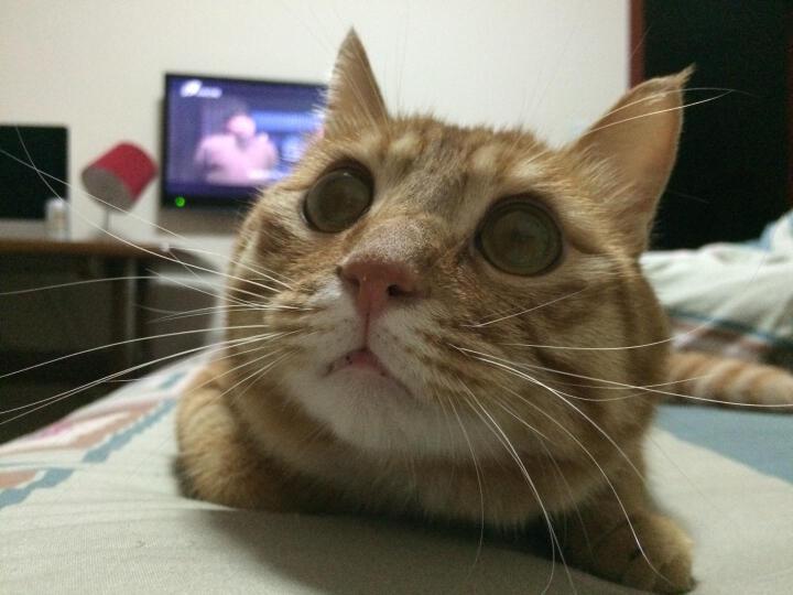 比瑞吉猫粮 天然粮 肾脏调理成猫粮2kg 晒单图