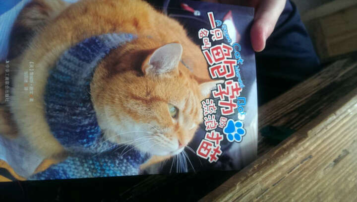 正版现货 一只名叫鲍勃的流浪猫 (升级版)  工商联 晒单图