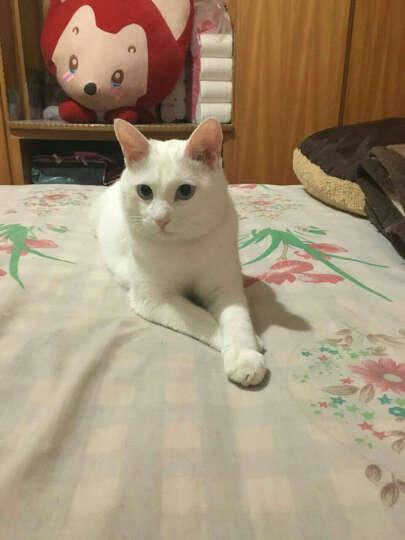 耐威克 猫粮 理想体态猫粮 成猫 10kg 晒单图