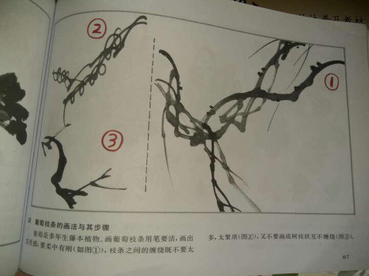学国画 中国画技法普及教材(一):花鸟集 晒单图