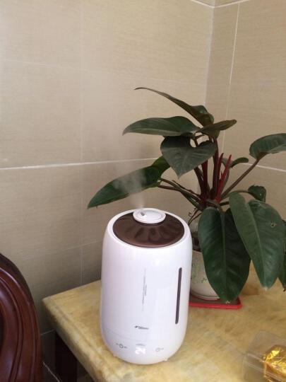 德尔玛(Deerma)加湿器 5L大容量 触控感温 家用静音迷你办公室卧室香薰加湿 DEM-F600(珍珠白) 晒单图