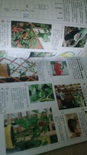 在阳台上种植可口的蔬菜 晒单图