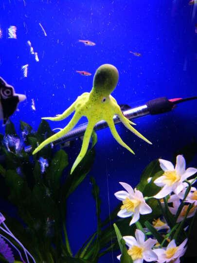 樂享一寵 鱼缸造景仿真海洋生物 海马海龙 狮子鱼小彩鱼 水族箱装饰品假鱼塑料 观赏鱼带吸盘 小章鱼红色 AM0010 晒单图