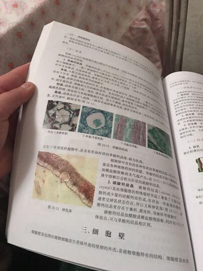 全国高等院校规划教材:药用植物学 晒单图