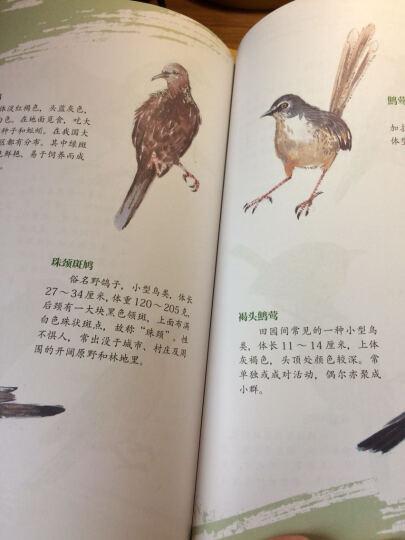 动物手绘图谱·鸟类 晒单图