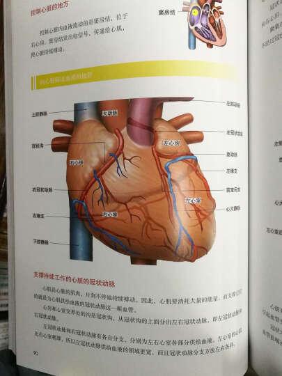 3D人体解剖图 晒单图
