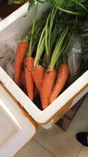 大菜园 手指胡萝卜 迷你 500g 新鲜蔬菜 西餐带叶小胡萝卜 沙拉菜 日天 生鲜 迷你型 晒单图