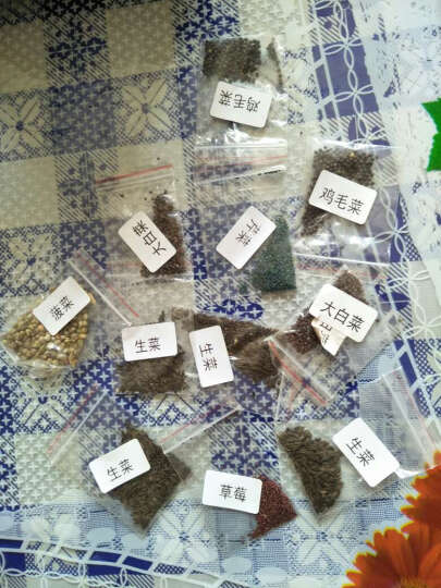 蔬菜种子四季播种包邮阳台种套餐水果田园秋季盆栽芽苗小白菜种子 木耳菜30粒 晒单图