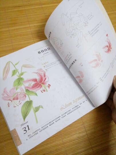 正版包邮 飞乐鸟花之绘经典套装1234全 色铅笔手绘素描彩铅绘画书 彩铅入门基础教程书 晒单图