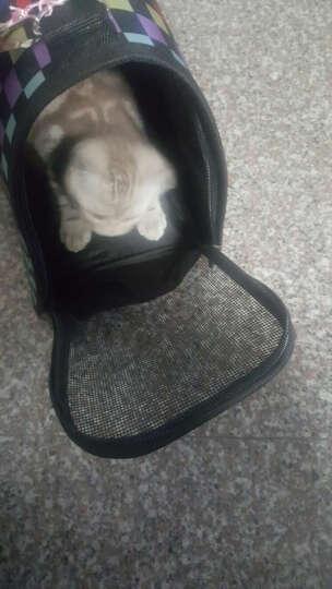 文宠宠物包猫咪背包泰迪外出便携旅行包狗狗包包猫猫包猫笼袋子箱用品 颜色随机   还有图以外的颜色 M-中型适合5-9斤 晒单图