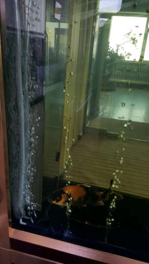 鱼缸增氧泵 静音氧气泵 养鱼冲氧泵 水族箱打氧机外置水族配件用品 AP8806双孔4.1W 晒单图