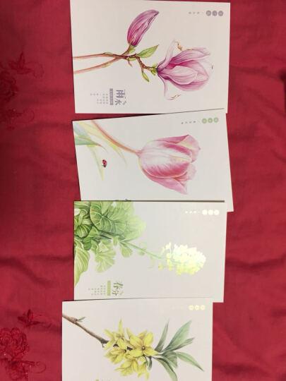 二十四节气花语明信片  为思念的TA画朵花儿 晒单图