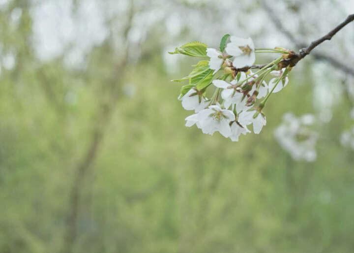 索尼(SONY)ILCE-6000L/ a6000 微单相机入门级 女神相机 含(16-50+E50/1.8)双镜套装 银色 晒单图
