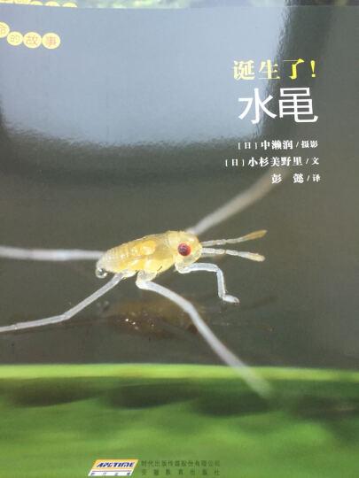 北斗童书·中国经典获奖童话:黑猫警长(套装共5册) 晒单图