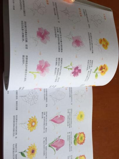 水彩入门必学500例 花卉篇 晒单图