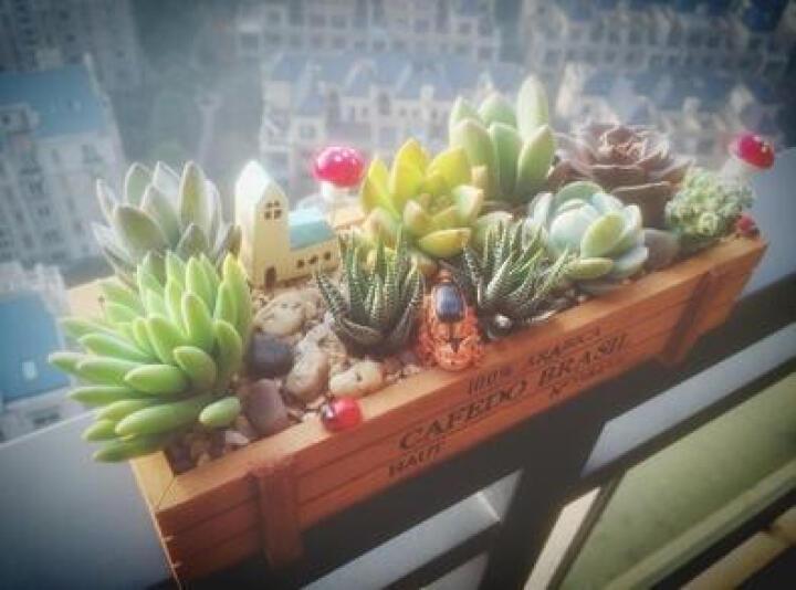 物有物语 苔藓微景观盆栽 diy办公室创意室内盆栽盆景生态瓶多肉植物组合 丛林【11个植物】 晒单图
