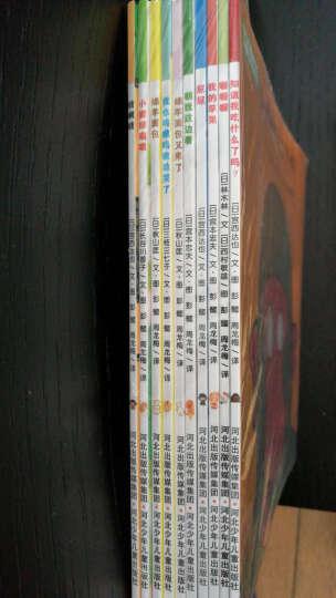 北斗童书·铃木绘本·蒲公英系列(套装共10册) 晒单图