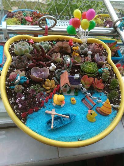 微景观园艺多肉植物花盆迷你摆件  DIY装饰生日蛋糕仿真动物人物卡通创意花园 花盆迷你工艺品 求婚一对 晒单图