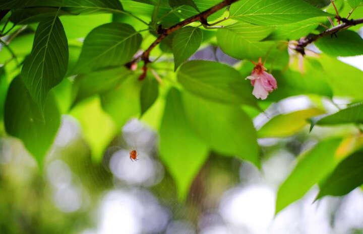 嘉蕊(JARAY)35mm f1.2微单镜头索尼E卡口富士手动人文定焦相机镜头人像街拍摄影系列 套餐一 佳能微单-银色 晒单图