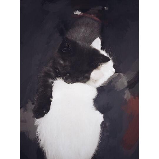 伟嘉 宠物猫湿粮猫咪零食 成猫精选鲜肝 85g 晒单图