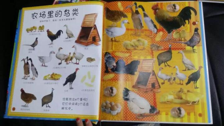 DK幼儿百科全书:第一套头脑体操书(套装共4册) 晒单图