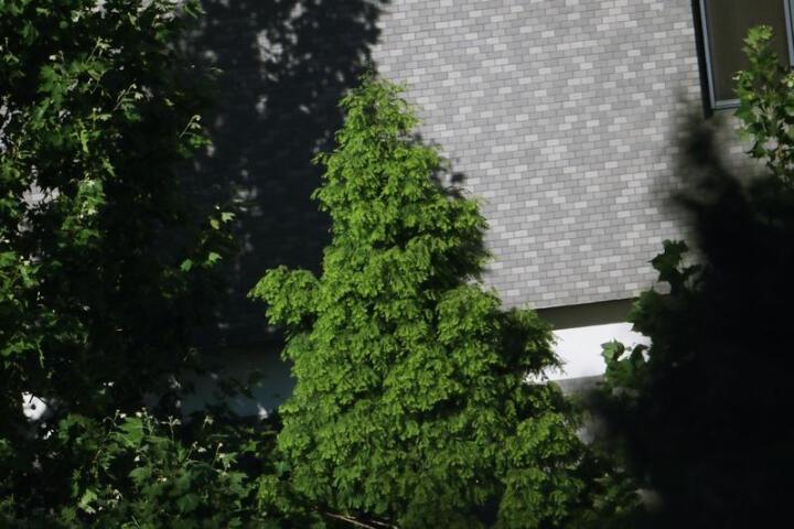 嘉蕊(JARAY)500mm F6.3全画幅折返镜头/单反微单相机手动长焦远拍摄影镜头 标配 富士口-黑色 晒单图