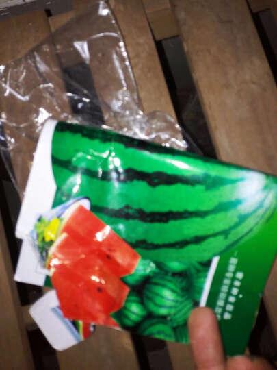 四季播种蔬菜种子 黑皮无籽西瓜种子 8424西瓜 黑美人大红宝西瓜种极甜早佳 早佳8424 晒单图