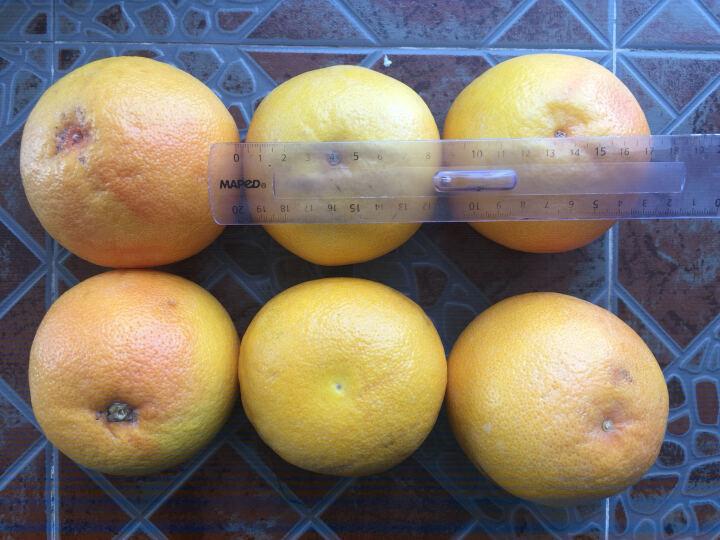 【顺丰配送 第二件减10元】好怡 南非进口红心西柚4个 单果350g-250g 葡萄柚水果 晒单图