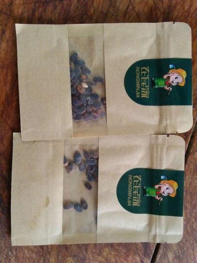 黑美人西瓜台湾大果黑美人西瓜种子早熟大果大田蔬菜种子水果种子 原包装懒汉瓜种子 晒单图