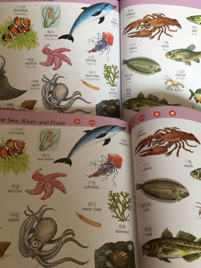 我的第一本英汉图画词典(2017版附赠学习套装) 晒单图