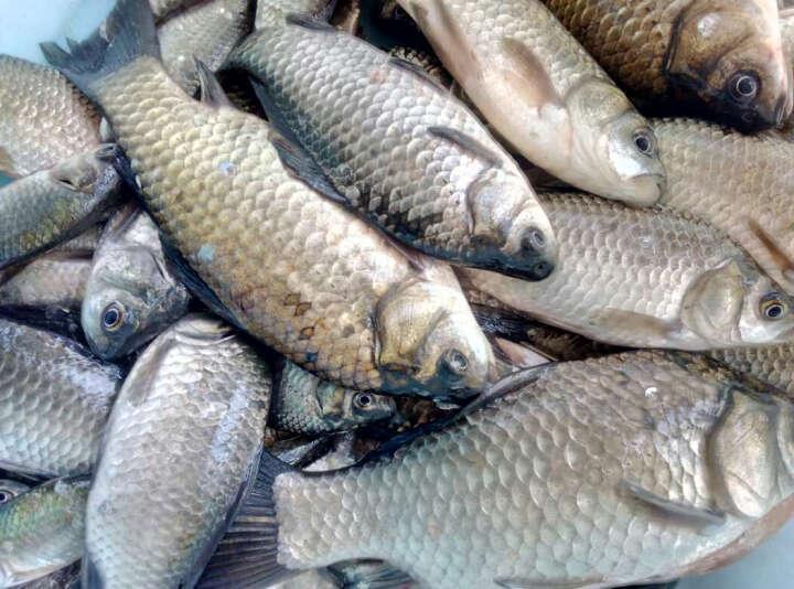 MFREE 碳纤维台钓竿 轻便碳素40T长节钓鱼竿手竿垂钓渔具用品 鱼竿鱼线 鱼竿 4.5米 晒单图