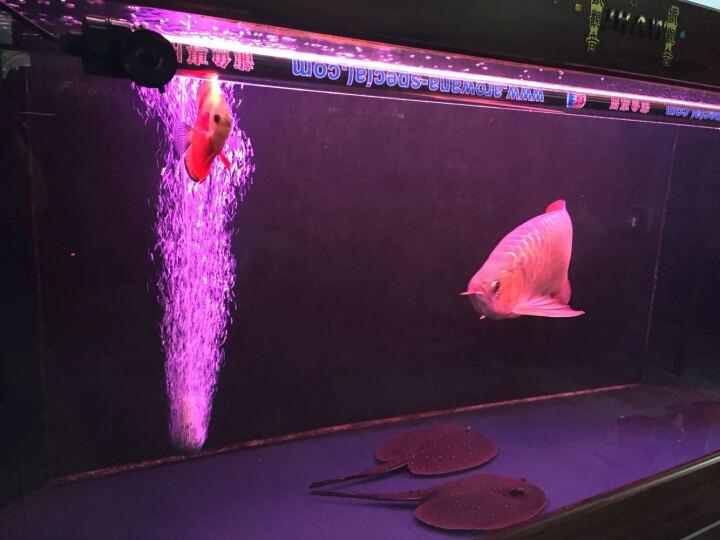 疯狂水草(FKSC)霸王 鱼缸超静音氧气泵增氧泵充氧泵 大型水族箱养鱼打氧泵机大功率 豹风单孔套餐六 晒单图