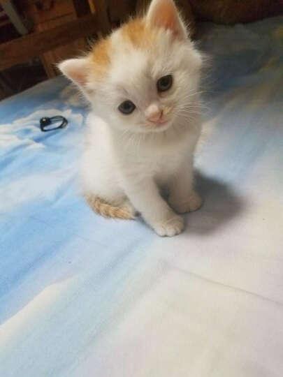 美滋元 宠物主粮 猫奶糕 500g 晒单图