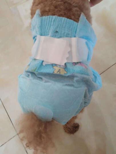 锦和宠物 波波 宠物纸尿裤宠物生理裤 一次性狗狗尿不湿发情尿垫尿片10片装尿布 SS 腰围17-19cm 晒单图