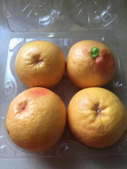 山姆 南非进口 红西柚 4个 晒单图