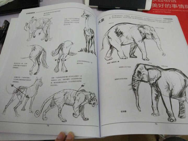 动物素描指南(从动作形态.结构.解剖让你掌握绘画动物的诀窍)/西方经典美术技法译丛 晒单图