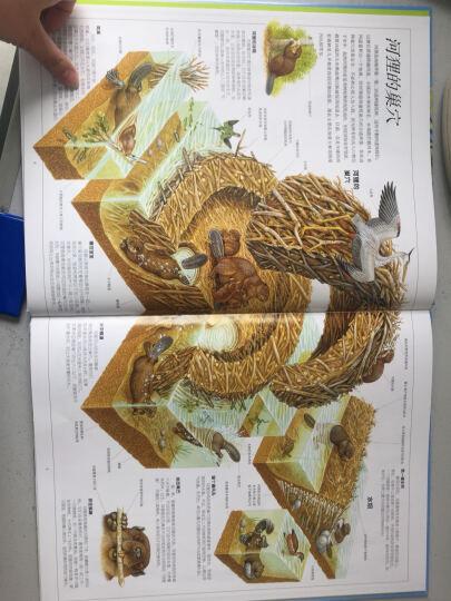 赛尔号雷伊传说·魔神篇(1):魔神复活 晒单图