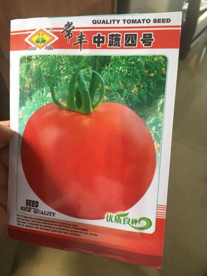 蔬菜种子小番茄种子圣女果种子四季播种子蔬菜芽苗 阳台盆栽水果草莓香菜籽葱种子 木耳菜 晒单图