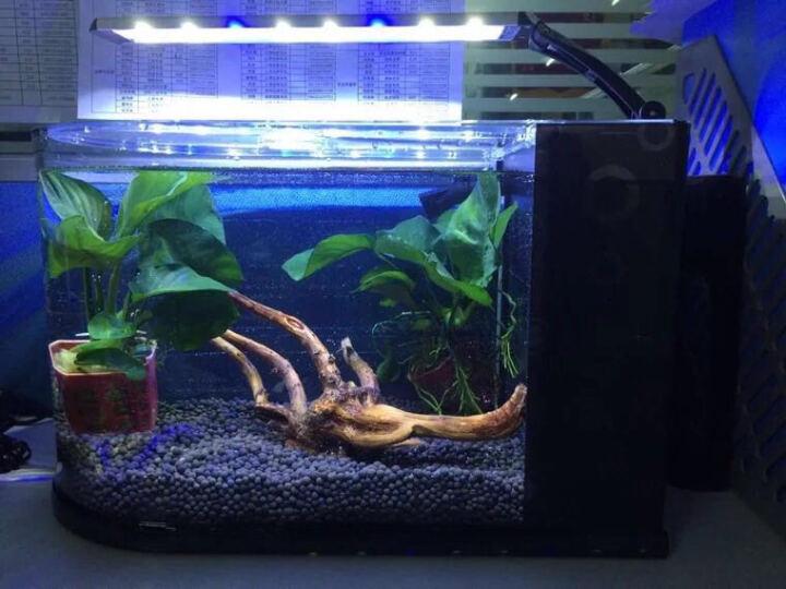 喜高 子弹头创意桌面鱼缸办公家用客厅小型生态鱼缸玻璃鱼缸水族箱懒人鱼缸 子弹头58CM黑色真水草保温套餐 晒单图