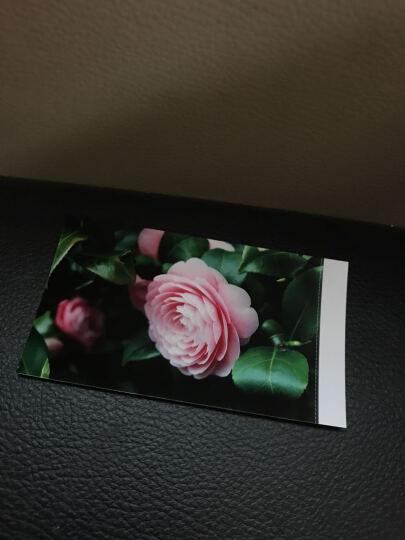 呈妍(Hiti) Pringo P231升级版P232手机照片打印机 便携式口袋相片打印机 P232相纸108张 晒单图