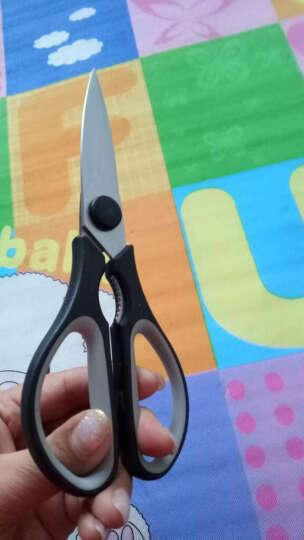 摩登堡厨房多功能剪刀 核桃夹刮鱼鳞厨用家用大剪刀 MDF-JD001 晒单图