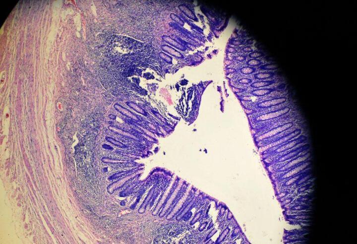 美佳朗(MCALON) 生物显微镜MCL-1600专业儿童学生高倍高清畜牧养殖可接电脑 出厂标配+20礼品 晒单图