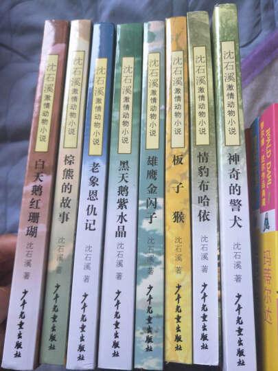 沈石溪激情动物小说 情豹布哈依/板子猴/白天鹅红珊瑚全集8册每套 9-10-12-15岁 晒单图