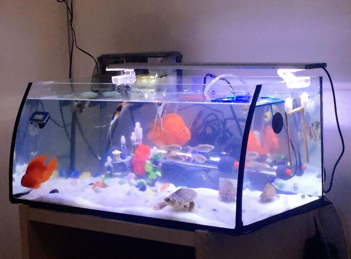 喜高 创意小鱼缸桌面鱼缸生态鱼缸高清玻璃迷你水族箱热带鱼金鱼缸懒人鱼缸 大肚子48CM黑色保温 晒单图