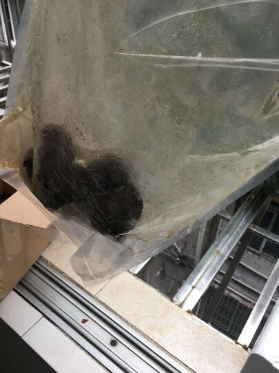若简云南特产 香格里拉野生菌 鲜冻黑松露菌 块菌 猪拱菌5cm-7cm 500g 晒单图