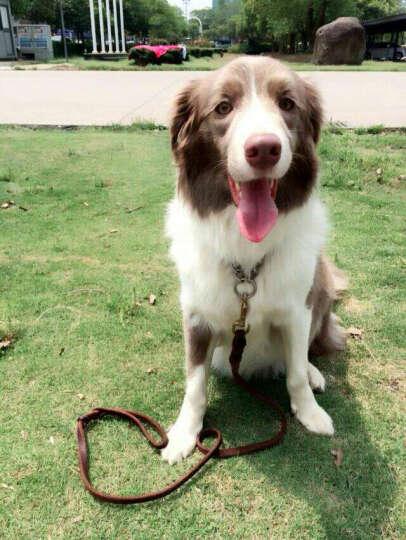 【满99减20】怡亲 中大型犬成犬狗粮2.5kg 哈士奇边境萨摩金毛狗粮 晒单图