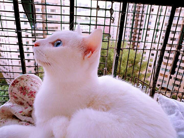 小宠猫咪专用益生菌5g*7袋 宠物猫咪肠胃宝益生菌 晒单图